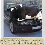 Karve ant BMW