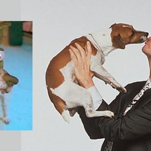 Šuniukas Mailo iš filmo Kaukė